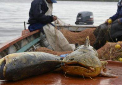 Evalúan medidas que resguarden el recurso ictícola ante la bajante extraordinaria del río Paraná