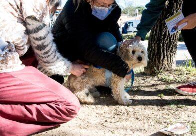 Retoman los operativos barriales de Salud Animal